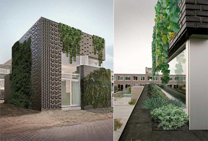 Ijburg House - Ngôi nhà kết hợp tường gạch với cây dây leo 2
