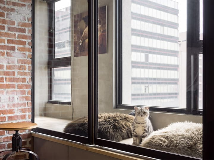 Mẫu thiết kế căn hộ loft đẹp dành cho mèo và chủ của chúng 13