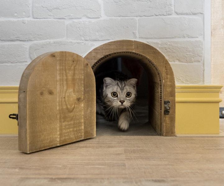 Mẫu thiết kế căn hộ loft đẹp dành cho mèo và chủ của chúng 20